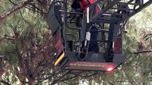 Son dakika haberleri: Balıkesir'de ağaçta mahsur kalan kediyi itfaiye kurtardı